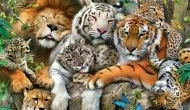 World Wildlife Day: Can we save the Big cat family?