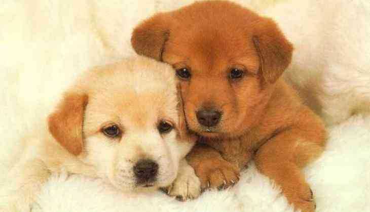 National Puppy Day: Don't fall prey to puppy scams