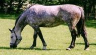 फेसबुक से ऐसे मिली पंजाब के पूर्व सीएम की गायब हुई घोड़ी