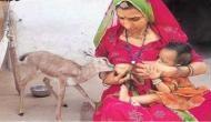 सलमान के खिलाफ लड़ने वाले बिश्नोई समुदाय के लोग हिरण को मानते हैं अपना बच्चा