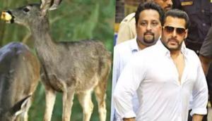 काला हिरण शिकार मामला: सलमान को मिलेगी राहत या फिर जाएंगे जेल, आज होगा फैसला