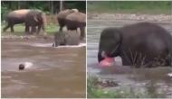 जब नदी के तेज बहाव में डूबते शख्स को मिला हाथी का सहारा, वीडियो वायरल