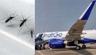 IndiGo passenger complains of mosquitoes in Lucknow-Bengaluru flight, offloaded; he used the word hijack, says airline