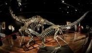 Outsize Dinosaur skeletons up for auction in Paris for $1.4 million