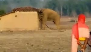 VIDEO: गांव में घुस आया जंगली हाथी, घरों का कर दिया ऐसा हाल