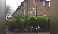 Interesting! London-based man raises money for charity by shaping hedges into elephants