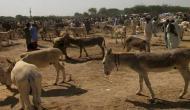 पाकिस्तान बन गया 'गधों का देश', रिपोर्ट में हुआ खुलासा