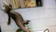 गर्ल्स हॉस्टल के बाथरूम पहुंची ऐसी चीज कि लड़कियों की निकली चीखें...
