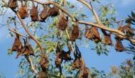 Kerala: Nipah virus takes toll on sale of fruits