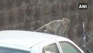 बंदर ने बाप- बेटी से सरेआम बैंक के बाहर लूटे लाखों रुपये, बनाया कंगाल