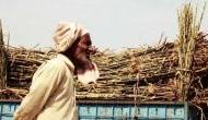 Uttar Pradesh: Sugarcane farmers discontent over delay in payment, seek govt support
