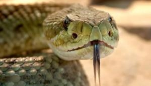 Man bites snake to death; reason will haunt you!