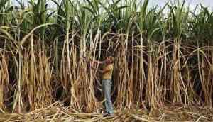 Sugarcane industry bailout: Ad-hocism won't solve farm crisis, say experts
