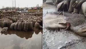 मध्य प्रदेश : 20 मिनट की बारिश में बर्बाद हो गया 50 हजार क्विंटल चना