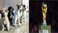 FIFA World Cup से पहले रूस में 20000 कुत्तों को मारने का आदेश, विवाद शुरू