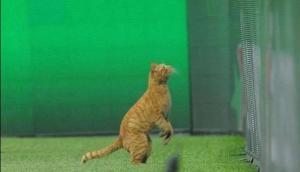 बिल्ली की वजह से लगा 27 लाख का जुर्माना, हैरान करने वाली है वजह
