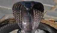 मजदूर के खून-पसीने से बनाए आशियाने पर जहरीले 'कोबरा गैंग' ने किया कब्जा