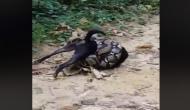 खतरनाक अजगर से कुत्ते को बचाने के लिए जान पर खेल गए दो शख्स, रूह कंपा देने वाला वीडियो वायरल