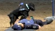 In Video: Incredible! Madrid police dog 'Poncho' performs CPR to 'save' his partner's life is the best thing you will see today
