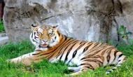 बाघ को खाना खिलाने गई थी महिला, तभी हुआ कुछ ऐसा कि लोगों की निकल गई चीख
