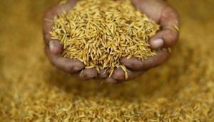 मोदी सरकार का किसानों को बड़ा तोहफा, धान के MSP में 200 रुपये का इजाफा