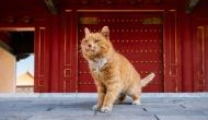 Mystic Moggy: China mourns death of 'World Cup Cat' who predicted correct outcome of six World Cup results