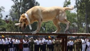 रिटायरमेंट के बाद आर्मी के कुत्तों को दी जाती है ये खतरनाक सजा
