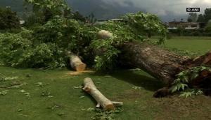 गुजरात सरकार ने पांच साल में गिराए 6.51 लाख पेड़