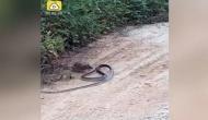 सांप पर भारी पड़ गया चूहा, जान बचाकर भागने का वीडियो वायरल