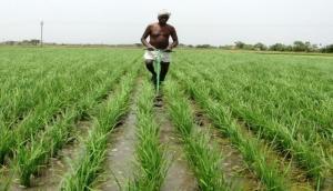 कृषि वैज्ञानिक क्यों हैं मोदी सरकार के इस कदम से नाराज, लिखा पत्र