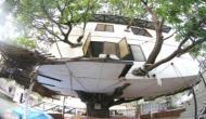 इस इंजीनियर ने दौड़ाया ऐसा दिमाग कि पेड़ पर ही बना दिया चार मंजिला मकान