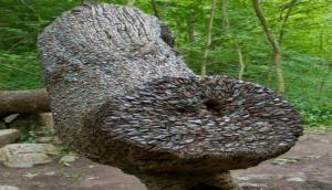 इस पेड़ पर हजारों साल से उग रहे हैं लाखों सिक्के, वजह जानकर होगी हैरानी