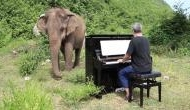 Watch video: Blind elephant rolls to British pianist Paul Barton's classical music in Thailand