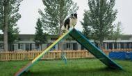 इस कुत्ते को वफादरी के बदले मिली 2 एकड़ के मकान में ऐशो-आराम की जिंदगी