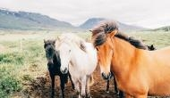 Animals may use muscles as an internal water source