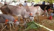 Madhya Pradesh announces monetary help for shrines offering cow shelter