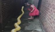 Video: इस खतरनाक अजगर से है इस छोटी सी बच्ची की दोस्ती, रहती है हर वक्त साथ