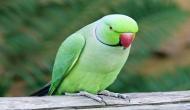 न्यूजीलैंड में मिला 190 लाख साल पुराना तोता, लंबाई और वजन जानकर चौंक जाएंगे आप