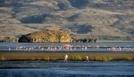 रहस्यों से भरी है ये झील, यहां आने वाला हर पशु-पक्षी पलभर में बन जाता है पत्थर