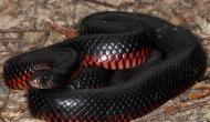 IndiGo Airlines की फ्लाइट में यात्री पर गिरा खतरनाक कोबरा और फिर…