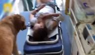 वफादार कुत्ते ने मालिक को नहीं छोड़ा अकेला, एंबुलेंस में बैठकर पहुंचा अस्पताल