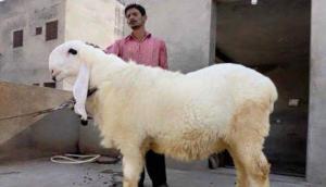 Eid-Al-Adha: गुजरात हाईकोर्ट का आदेश- सार्वजनिक रूप से पशु वध पर लगे प्रतिबंध