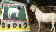 Bakra-Eid: People in Lucknow to celebrate Bakr-Eid by cutting cakes, not goats