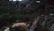 Man, 116 cattle killed after portion of hill collapsed in Himachal Pradesh