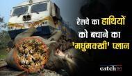 रेलवे का 'मधुमक्खी' प्लान बचाएगा हाथियों की जान, ट्रैक से कटकर जाती हैं हजारों जानें
