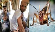 पाकिस्तान क्रिकेट टीम के खिलाड़ियों पर कीड़ों का हमला, 8 खिलाड़ी अस्पताल में भर्ती
