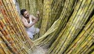 Cabinet okays Rs 4,500-cr package to sugar industry