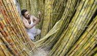 दिल्ली में आंदोलन के बीच गन्ना किसानों को बड़ा तोहफा, 3,500 करोड़ की सब्सिडी को मंजूरी