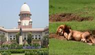 गुजरात: गिर में दो दर्जन शेरों की मौत के बाद सुप्रीम कोर्ट ने केंद्र और राज्य से पूछे ये सवाल