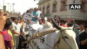 पेट्रोल डीजल के बढ़ते दामों के विरोध में केंद्रीय मंत्री विजय गोयल ने चांदनी चौक में चलाई बैलगाड़ी